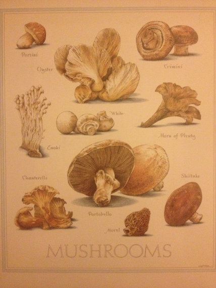 This is a mushroom poster we have framed on our wall. It is from the back cover of Cooks Illustrated Magazine.