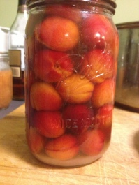 I selected the prettiest tiny little apricots to make apricot bounce - apricots with sugar drowned in straight brandy. The jar will sit until Christmas, then we get boozy on fruit!