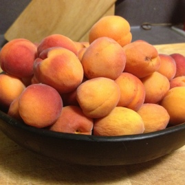 We ate a LOT of apricots and peaches, and gave many away to friends and neighbors.