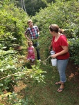 Beth (in red), Sophia (in pink) and Oleg (in Vermont Plaid) picking blueberries.