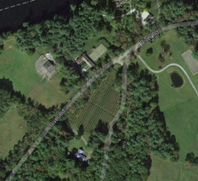 From the satellite images you can see the rows of bushes.