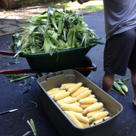 That pile of corn husks will do great in my compost pile.