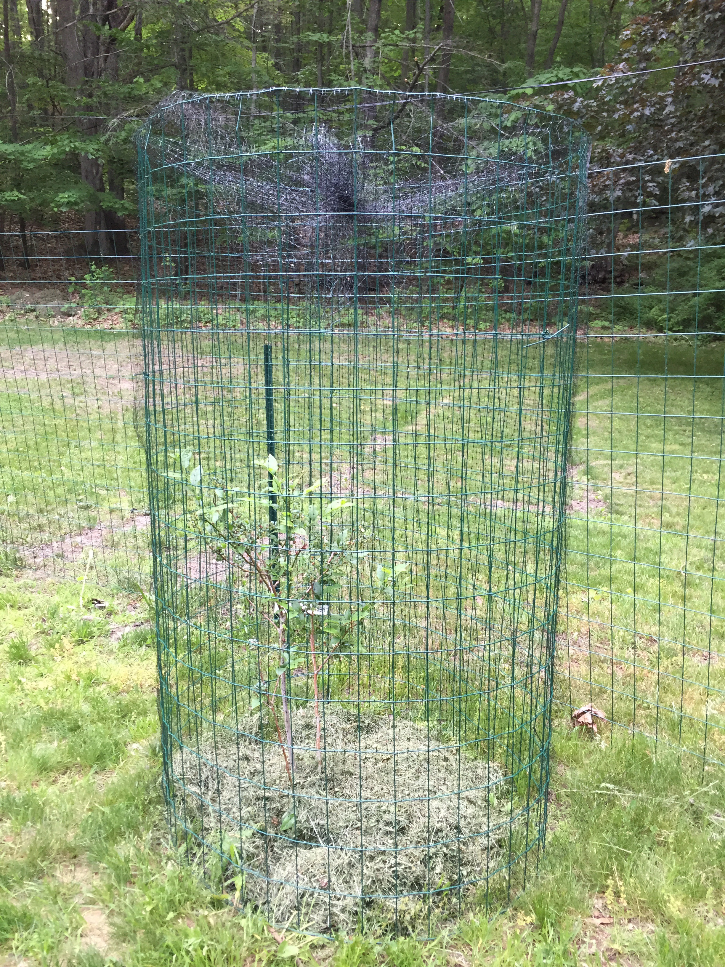 fruit vegetable for amphitheatreatregencypark walk cage bird buy aluminium new in fabulous line garden of netting premium
